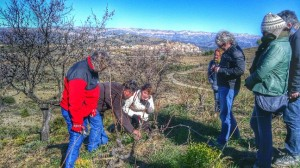 wine tourism in Priorat: grapevine pruning master class calçotada Gratallops