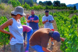 grape harvest master class, Celler Devinssi, Gratallops, DOQ Priorat