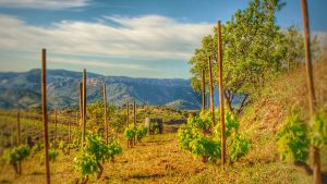 vignoble du Priorat